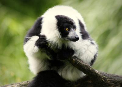 Auteur: ZooParc Overloon
